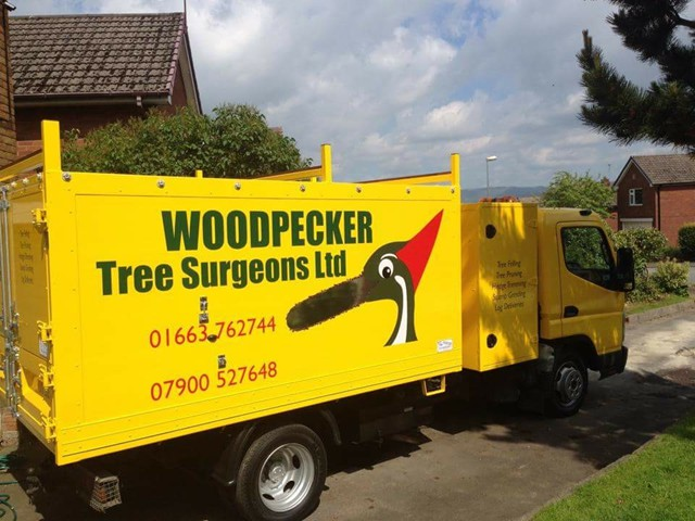 tree surgeons stockport picture gallery